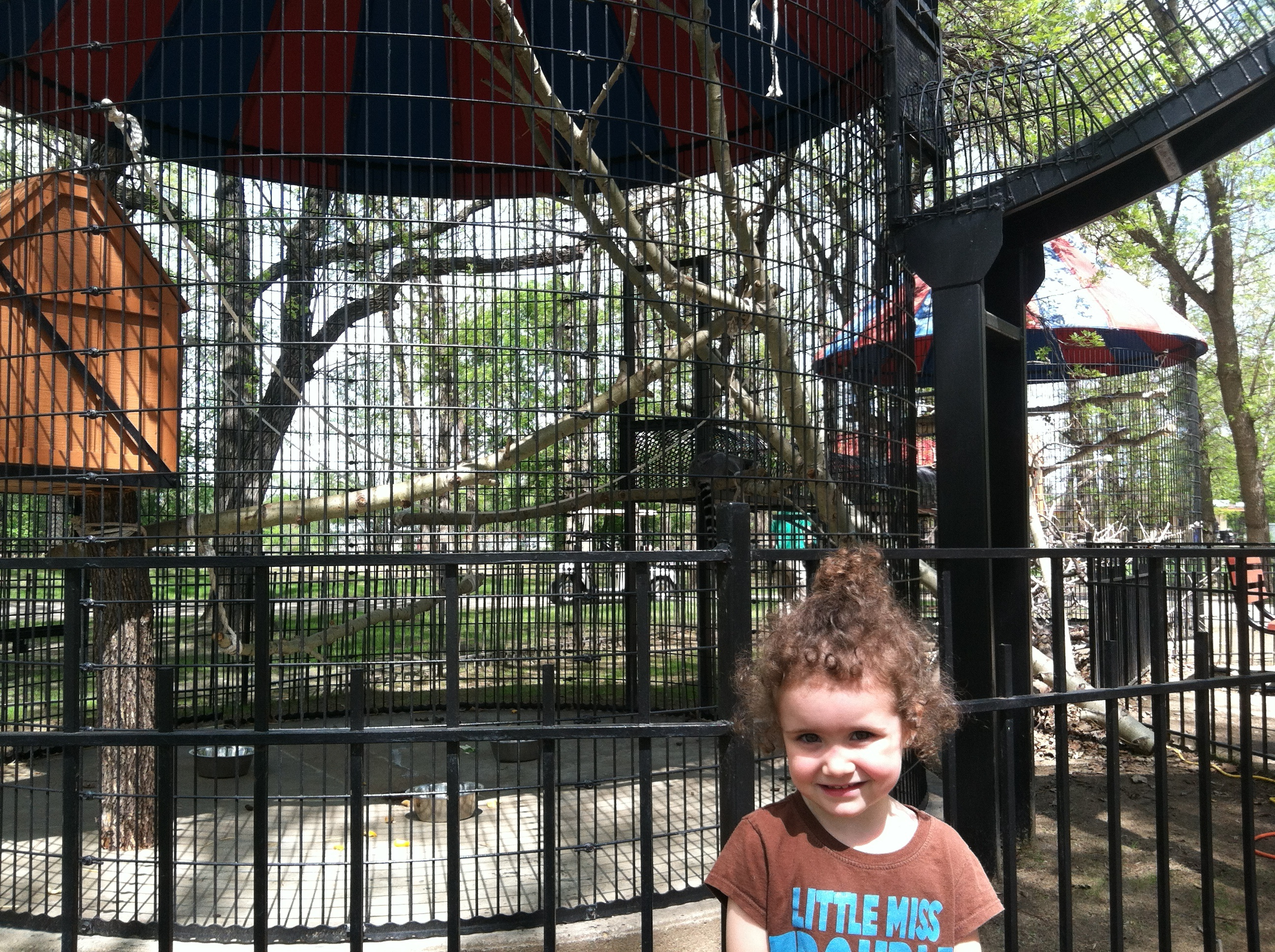 They are kind of hard to see, but there are a few Ring-Tailed Lemurs in the background.