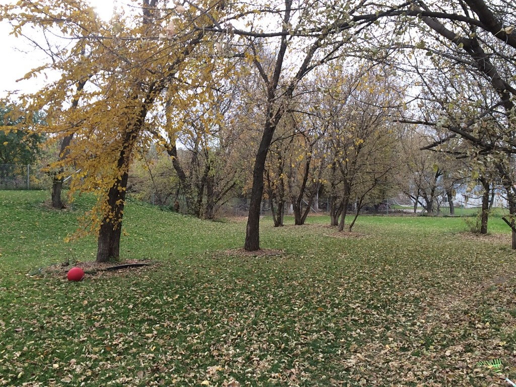 Our yard in autumn.