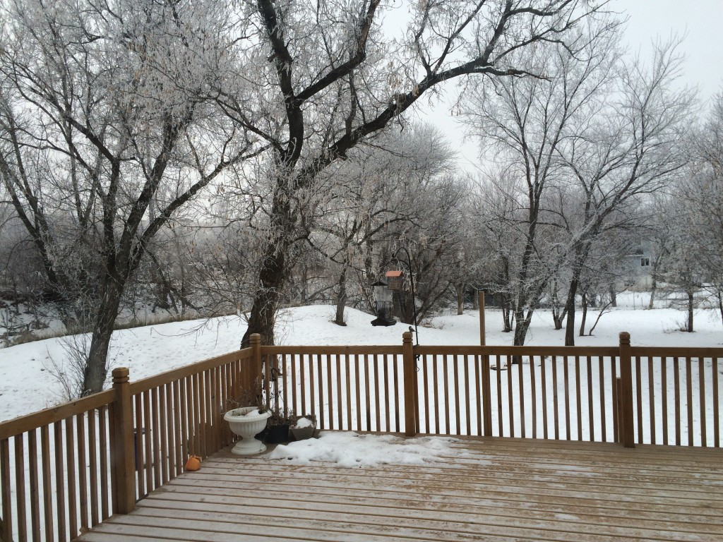 Our yard right now. A frosty,  beautiful morning!